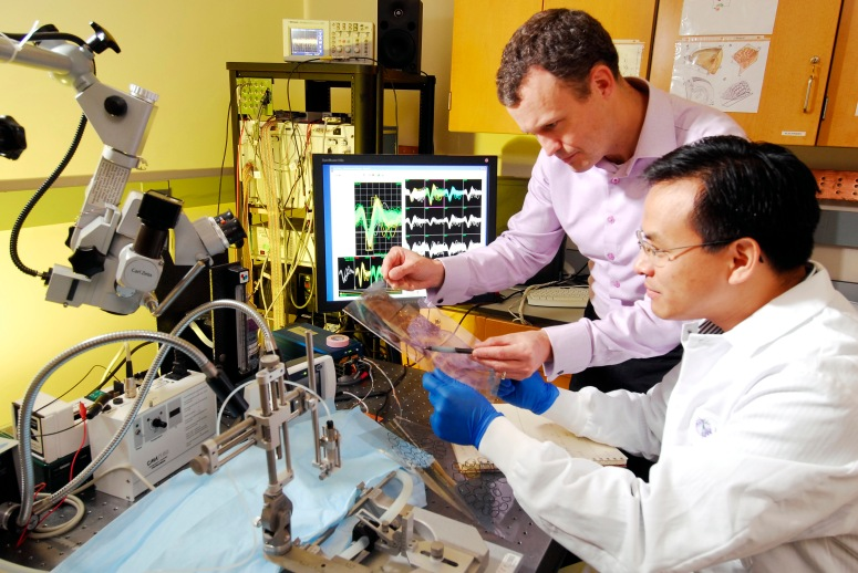 What-is-Biomedical-Engineering-8.jpg